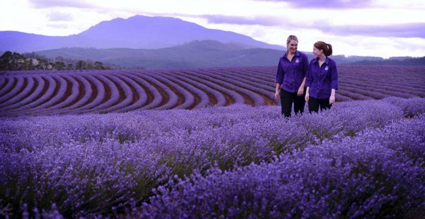 18 Amusing Things To Do In Tasmania